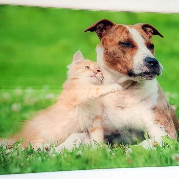 So süß, die kleine Katze spiet auf unserem Acrylbild ;-)