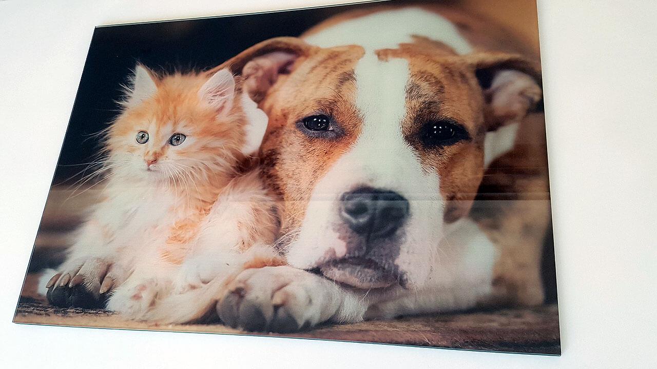 Hund und Katze als Motiv für unser Acrylposter Bild