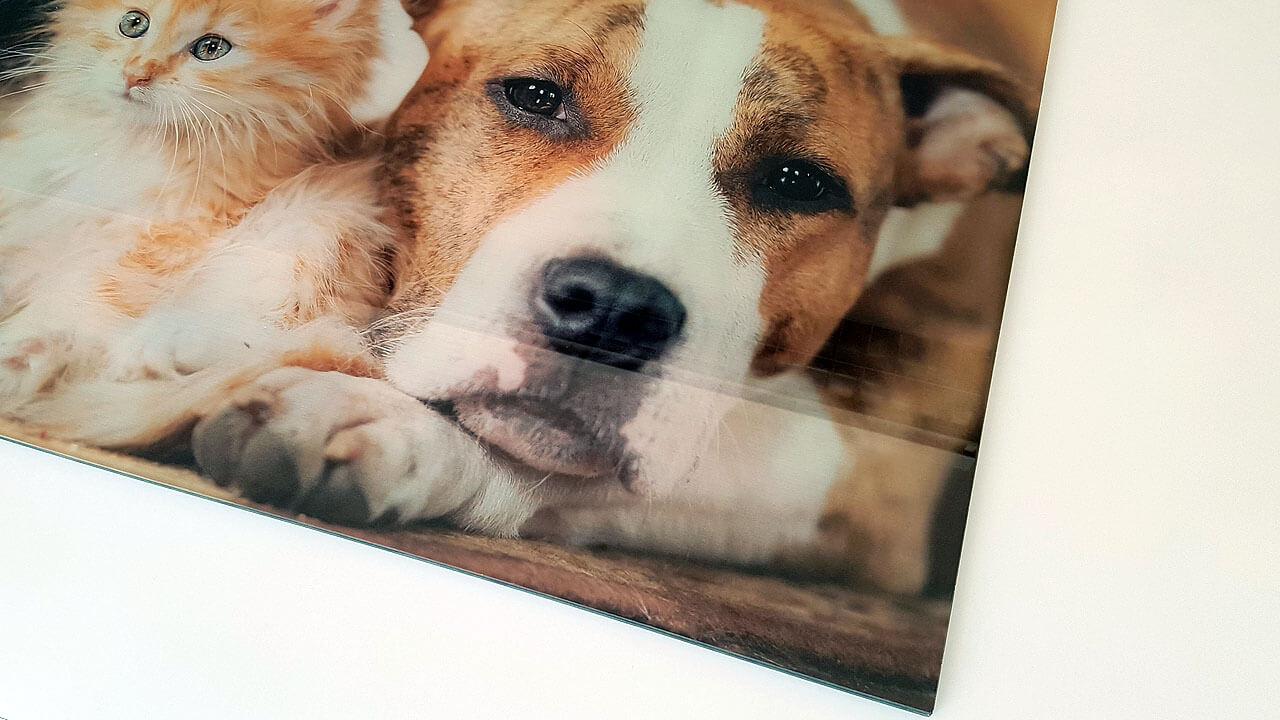 Kante des Acrylbildes - Hund und Katze